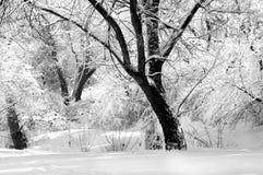 Zima w czarny i biały obraz stock