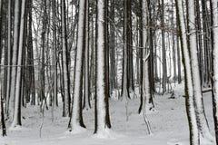 Zima w drewnach Zdjęcia Stock