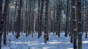 Zima w drewnach 02 Fotografia Stock