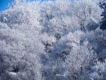 Zima w Golo Burdo górze, Bułgaria Obraz Stock