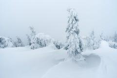 Zima w halnym lesie Obrazy Stock