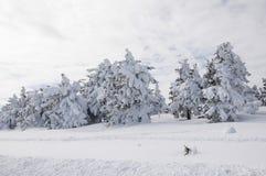 Zima w Harz Zdjęcia Royalty Free