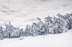 Zima w Harz Obrazy Royalty Free