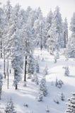 Zima w Harz Zdjęcie Stock