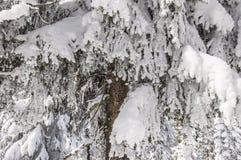 Zima w Harz Obraz Royalty Free