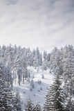 Zima w Harz Obrazy Stock