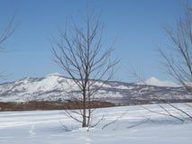 Zima w Kamchatka Śniegu i mrozu widok zdjęcia stock
