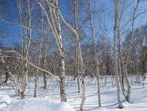 Zima w Kamchatka Śniegu i mrozu widok obraz royalty free