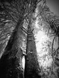Zima w lesie Zdjęcie Stock