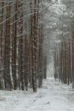 Zima w lesie Fotografia Royalty Free