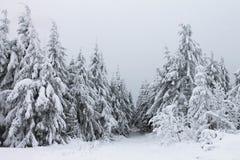 Zima w lesie Zdjęcie Royalty Free