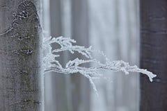 Zima w lesie, drzewa z oszrania Zimna zima z lodem na drzewnym blanch w Europa, Niemcy Zimy drewno, biały lasu krajobraz Sm obraz royalty free