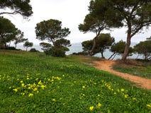 Zima w Mallorca Zdjęcia Royalty Free