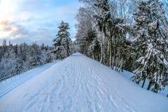 Zima w naturze Obraz Royalty Free