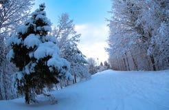 Zima w naturze Fotografia Royalty Free