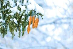 Zima w naturze Zdjęcia Royalty Free