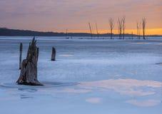 Zima w nowym - bydło fotografia stock