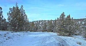 Zima w obszarze trawiastym Obraz Royalty Free