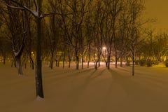 Zima w parku Fotografia Stock