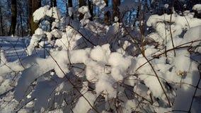 Zima w parku obraz stock