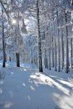 Zima w Serbia Zlatibor 2017 Obrazy Royalty Free
