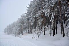Zima w Serbia Zlatibor 2017 Zdjęcie Royalty Free