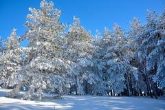 Zima w Serbia Zlatibor 2017 Zdjęcia Stock