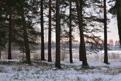 Zima w Szwecja Obrazy Stock