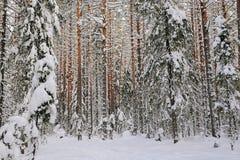 Zima w wildwood Fotografia Stock