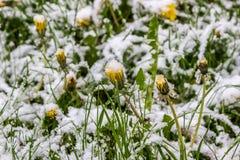 Zima w wiośnie, Maj 2017, Białoruś Fotografia Stock