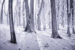 Zima w zamarzniętym lesie Zdjęcie Royalty Free