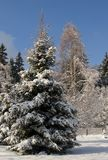 Zima w zimie w lecie w jeden kolorze i obraz royalty free