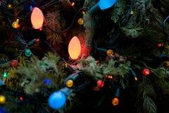 Zima wakacje zieleni choinka z światłami Obraz Royalty Free