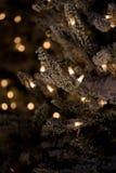Zima wakacje zieleni choinka z światłami Fotografia Royalty Free