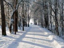 Zima widok aleja w parku w dużym mieście obraz stock