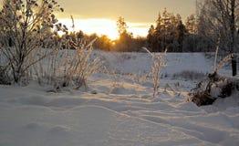 Zima wieczór w lesie Obraz Royalty Free