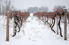 Zima winnicy Fotografia Stock