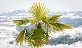 Zima winnicy z małą palmą koloru córek wizerunku matka dwa Fotografia Royalty Free
