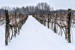 Zima winogradów scena Obraz Stock