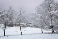 Zima świt Obraz Stock