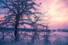 Zima wschód słońca w wsi obraz stock