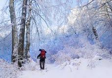 Zima wycieczkuje w lesie Zdjęcie Stock