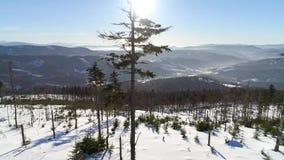 Zima wzrosta Drzewna antena 4k zdjęcie wideo