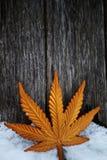 Zima złocistego liścia śnieżna zabawka obraz royalty free