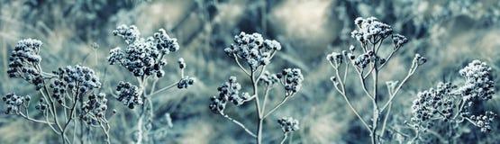 Zima Zamarznięta roślina w śniegu Zdjęcia Royalty Free