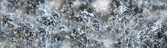 Zima Zamarznięta roślina w śniegu Fotografia Stock