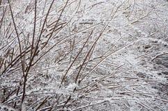 Zima. Zamrażać. zdjęcie royalty free