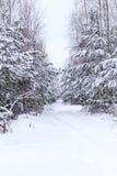 zima, zimno, śnieg Zima las pod śniegiem ciężkie gałąź wszystko w śniegu tonowanie fotografia royalty free