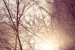 Zima zmierzch iluminuje zamarzniętych drzewa Zdjęcia Royalty Free