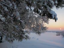 Zima zmierzchu jaśnienie w sosnowych drewnach Fotografia Royalty Free